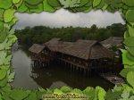 Hutan Bakau di Nongsa